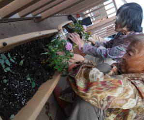 花の苗植え~Lian南が丘~