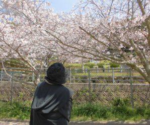 お花見ドライブin元宮公園~すまいるはぁと~