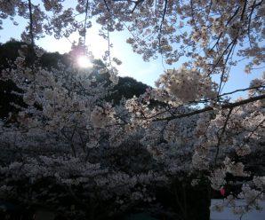 花見ドライブ~LIAN南ヶ丘~