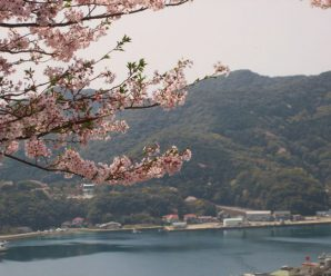 龍観山でお花見~さんくす